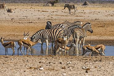 Animals flocking around a waterhole, Etosha National Park, Namibia, Africa