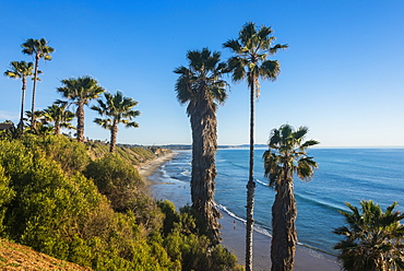 Palm trees above the cliffs in Cardiff, California, United States of America, North America