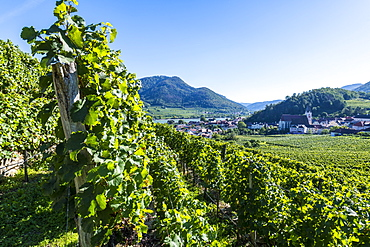 Vineyards overlooking Spitz on the Wachau, UNESCO World Heritage Site, Austria, Europe