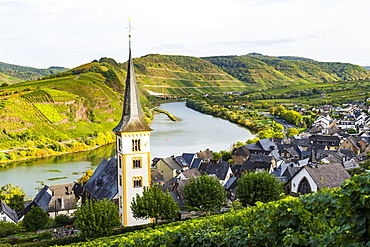 Vineyards above Bremm on the Moselle River, Rhineland-Palatinate, Germany, Europe