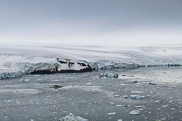 Aerial of the massive glacier of Alexandra Land, Franz Josef Land archipelago, Arkhangelsk Oblast, Arctic, Russia, Europe
