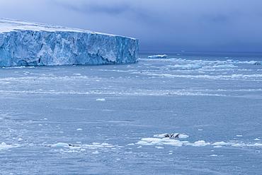 Very huge glacier on McClintok (MacKlintok) Island, Franz Josef Land archipelago, Arkhangelsk Oblast, Arctic, Russia, Europe