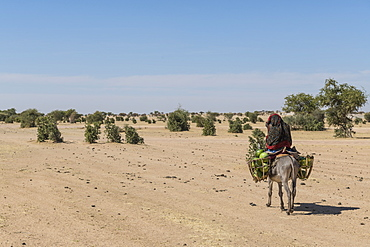 Woman on her donkey, Abeche, Chad, Africa