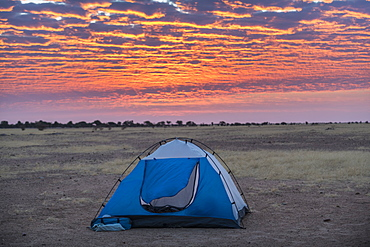 Camping under a dramatic morning sky in the Sahel, Chad, Africa