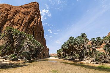 Waterhole, Ennedi Plateau, UNESCO World Heritage Site, Ennedi region, Chad, Africa