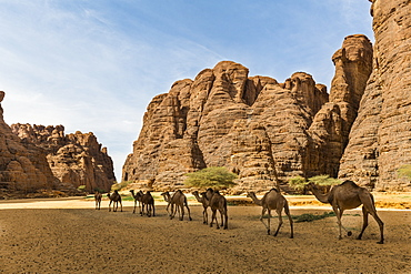 Animals at a waterhole in a rock amphitheatre, Ennedi Plateau, UNESCO World Heritage Site, Ennedi region, Chad, Africa