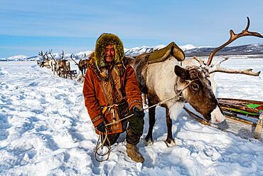 Evenk reindeer breeder with reindeers, Oymyakon, Sakha Republic (Yakutia), Russia, Eurasia