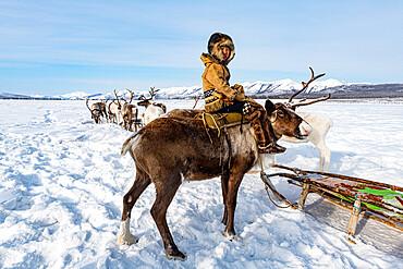 Evenk boy sitting on a reindeer, Oymyakon, Sakha Republic (Yakutia), Russia, Eurasia
