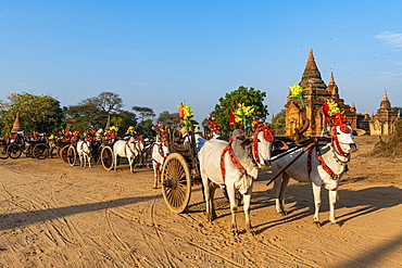 Colouful decorated ox carts, Bagan (Pagan), Myanmar (Burma), Asia