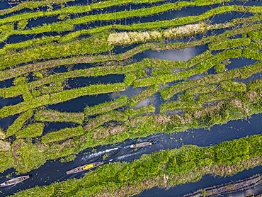 Aerial by drone of the floating gardens, Inle Lake, Shan state, Myanmar (Burma), Asia