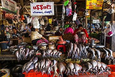 Fish market, Myitkyina, Kachin state, Myanmar (Burma), Asia