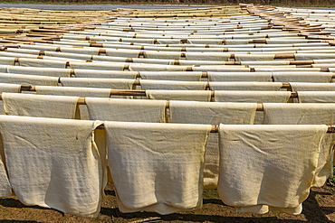 Fresh made rubber sheets at a Rubber plantation near Myeik (Mergui), Myanmar (Burma), Asia