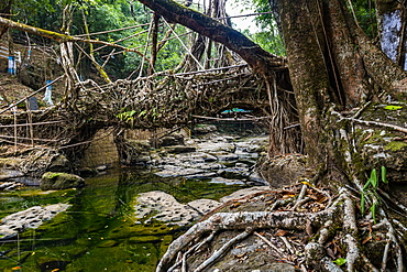 Mawlynnong living root bridge, Meghalaya, India, Asia