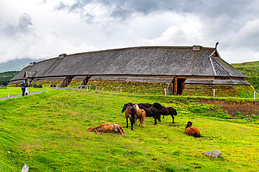 Horses grazing before the Reconstructed long house in the Lofotr Viking Museum, Vestvagoy, Lofoten, Norway