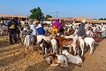 Animal market, Agadez, Niger, Africa