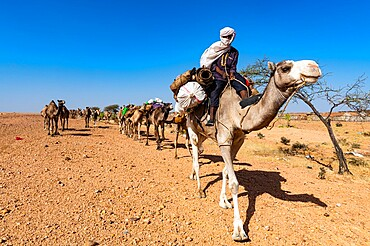 Camel carawan in the UNESCO World Heritage Site, Air Mountains, Niger, Africa