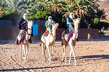 Traditional dressed Tuaregs on their camels, Oasis of Timia, Air Mountains, Niger, Africa