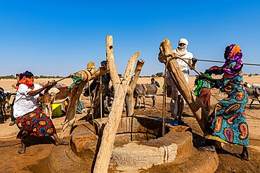 Tuaregs collecting water from a waterhole in the Sahel, north of Agadez, Niger, Africa