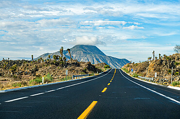 Road leading to El Pizarro volcano, Puebla, Mexico