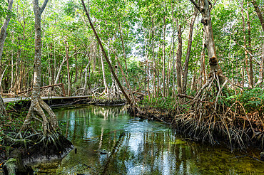 Mangoves in the Rio Celestun UNESCO Biosphere Reserve, Yucatan, Mexico, North America
