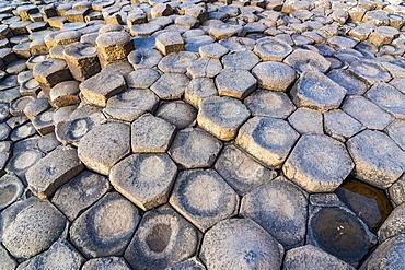 The Giants Causeway, UNESCO World Heritage Site, County Antrim, Ulster, Northern Ireland, United Kingdom, Europe