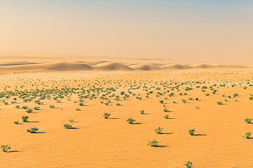 Green bushes in the Tenere desert, Niger, West Africa, Africa