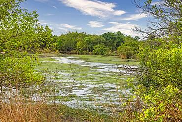 River flowing through the Yankari National Park, eastern Nigeria, West Africa, Africa