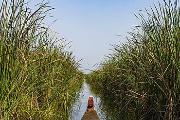 The Mesopotamian Marshes, The Ahwar of Southern Iraq, UNESCO World Heritage Site, Iraq, Middle East
