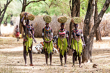 Girls with collected reeds on their heads on their way home, Toposa tribe, Eastern Equatoria, South Sudan