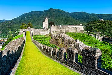 Vineyards in Castelgrande, Unesco site three castles of Bellinzona, Ticino, Switzerland