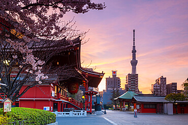 Sunrise at Sensoji Temple in Cherry blossom season