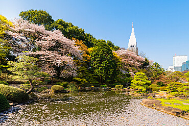 Shinjuku Gyoen and Yoyogi Building during cherry blossom.