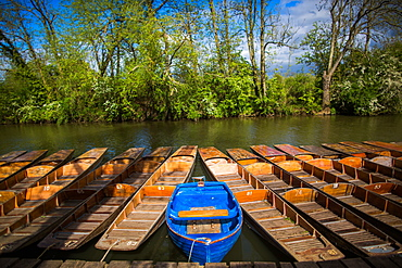 Punting, Cherwell Boathouse, Oxford, Oxfordshire, England, United Kingdom, Europe