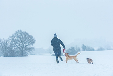 Labrador and Border Terrier playing in the snow with their owner, United Kingdom, Europe