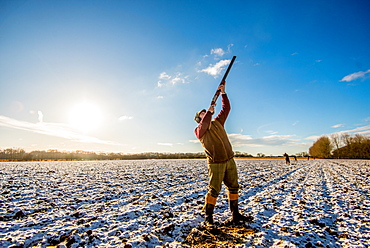 Landscape image of a gun on a frosty morning aiming at pheasants flying overhead, United Kingdom, Europe
