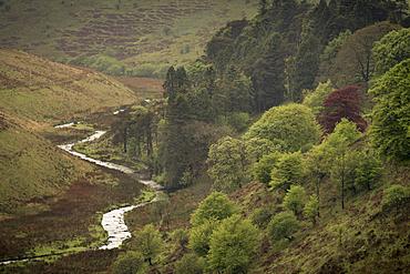 River Barle at Cornham Brake, near Simonsbath, Exmoor National Park, Somerset, England, United Kingdom, Europe