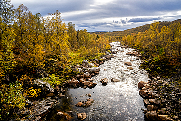 Silver birch (Betula pendula) in autumn colour and river, Senja, Norway, Scandinavia, Europe