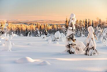 Snow covered winter landscape, Kuusamo, Finland, Europe