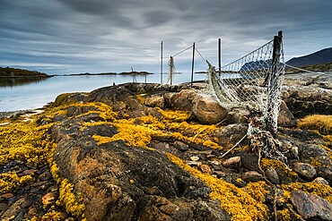Seaweed covered rocks and hanging fishing nets at low tide, west Senja, Norway, Scandinavia, Europe