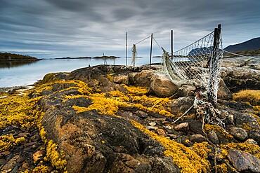 Seaweed covered rocks and hanging fishing nets at low tide, west Senja, Norway, Scandinavia, Europe