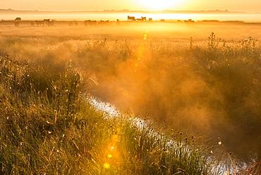 View of coastal grazing marsh habitat at sunrise, Elmley Marshes National Nature Reserve, Isle of Sheppey, Kent, England, United Kingdom, Europe