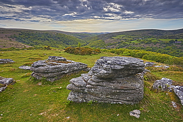 A massive granite boulder on Bench Tor, one of the classic features of Dartmoor National Park's landscape, Devon, England, United Kingdom, Europe