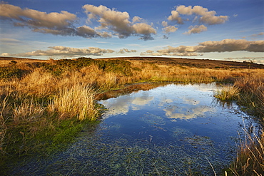 Marshland on the high rugged moors of Dartmoor National Park in evening sunlight, Gidleigh Common, near Chagford, Devon, England, United Kingdom, Europe