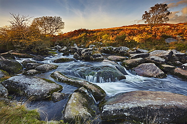 A moorland stream on rugged moors, the upper reaches of the River Teign, near Chagford, Dartmoor National Park, Devon, England, United Kingdom, Europe
