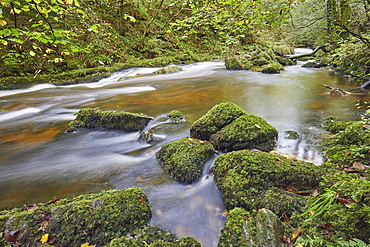 A woodland river surrounded by ancient woodland, the East Lyn River at Watersmeet, Exmoor National Park, Devon, England, United Kingdom, Europe