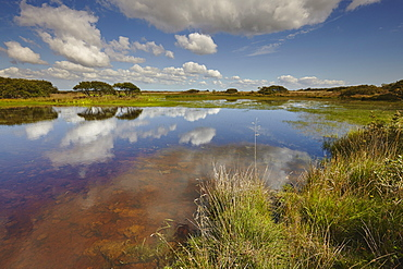 Croft Pascoe Pool, on Goonhilly Down, an important protected area for biodiversity, on the Lizard peninsula, in west Cornwall, England, United Kingdom, Europe