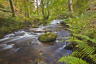 Horner Wood and Horner Water, at Pool Bridge, near Porlock, in Exmoor National Park, Somerset, England, United Kingdom, Europe