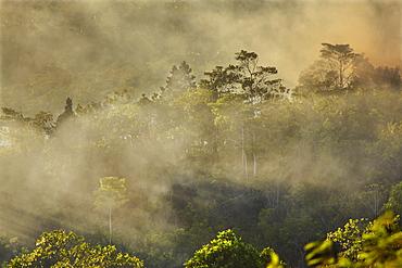 Smoke from a fire drifts across rainforest, near San Juan, Siquijor, Philippines, Southeast Asia, Asia