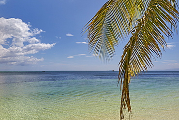Coconut palm fronds hang down over the shore along the beach at San Juan, Siquijor, Philippines, Southeast Asia, Asia