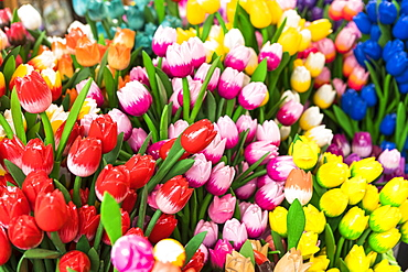 Wooden flowers for sale in Bloemenmarkt, Amsterdam, Netherlands, Europe